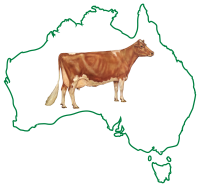 Guernsey Cattle Society of Australia